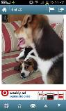 Our beagle is missing  PLEASE help   White Lane  amp  South H