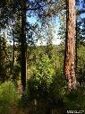 -  117000 Your own very private 11 92 acres   Somerset Showcase Ranches