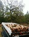 Professional FIREWOOD Cutters Crews Needed  PRODUCERS ONLY   Penn Valley  CA