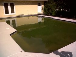 Green to clean swimming pool service special call 7O25746382 (Las Vegas )