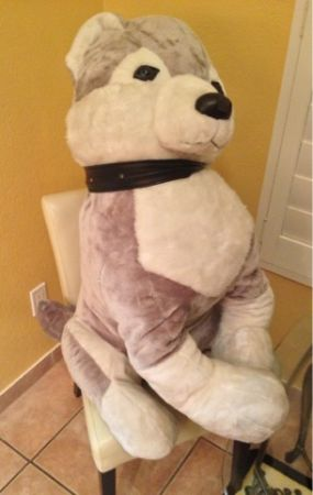 HUGE Life Size HUSY DOG STUFFED animal from FAO SHWARTZ  - $25 (Silverado Ranch 89123)
