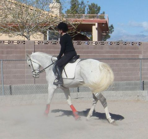 Januli Farms HORSEBACK RIDING LESSONS  TRAINING  (MOBILE TO YOU   SW Location too... )