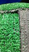 Used Artificial Turf  Patterson  Ca
