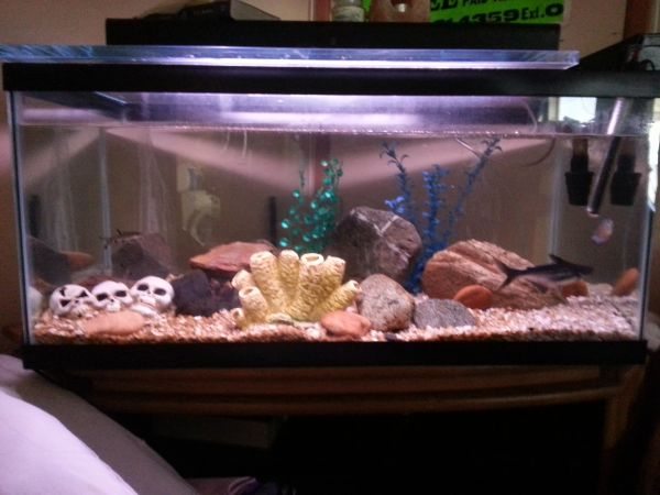 80 gallon fish tank for sale