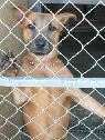 Did you LOSE your DOG   CAT in COSTA MESA or NEWPORT BEACH   Here is your Shelter- Please Check
