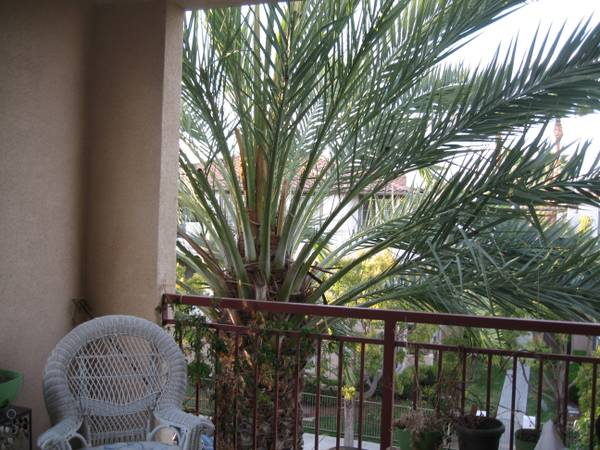 $2450  3br - 1541ftsup2 - The Lido Condo Mission Valley (8233 Station Village Ln)