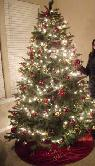 Christmas Tree for 2014 -  30  Chula Vista