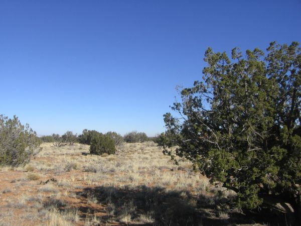 - $17000 Lot 266 Chevelon Canyon Ranch (HeberOvergaardChevelon Canyon Ranch)