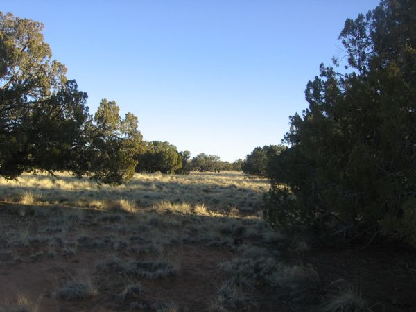 $36000 Gorgeous  Trees and Meadows (Chevelon Canyon Ranch Overgaard Heber)