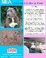 URGENT Medical Foster Need for Calm  Sweet Dog  San Luis Obispo  SB  Ventura Counties