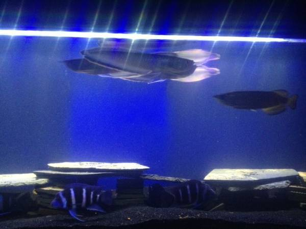 Fish Tank  BlackBlue Aro - $1 (Oxnard)
